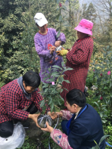 Local villagers helping with reinforcement planting of Magnolia omeiensis