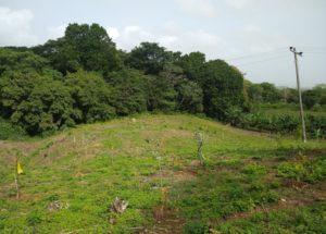 Restoration of habitat