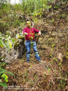 Monitoring planted  Carpinus tientaiensis seedlings.